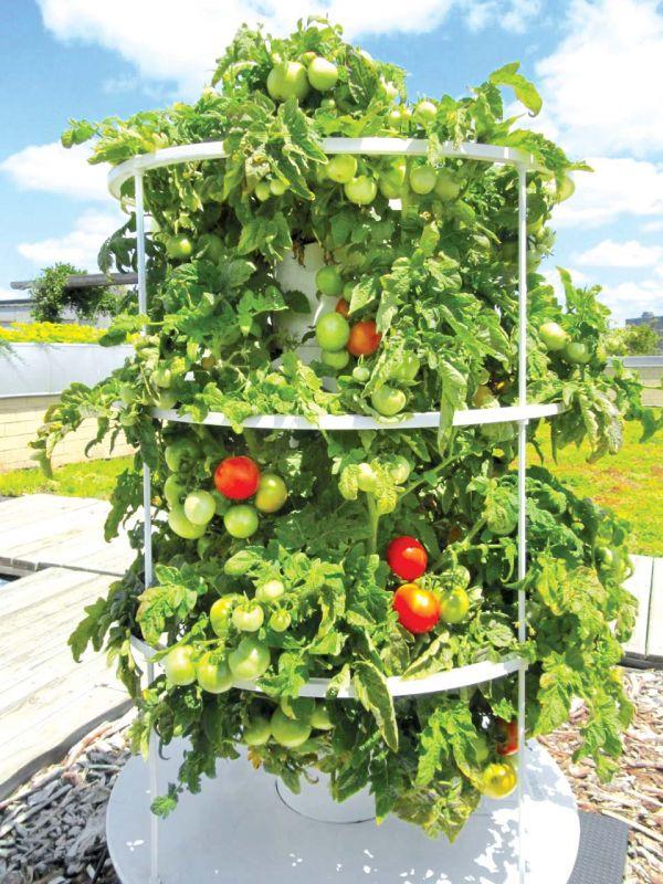 An organic home garden
