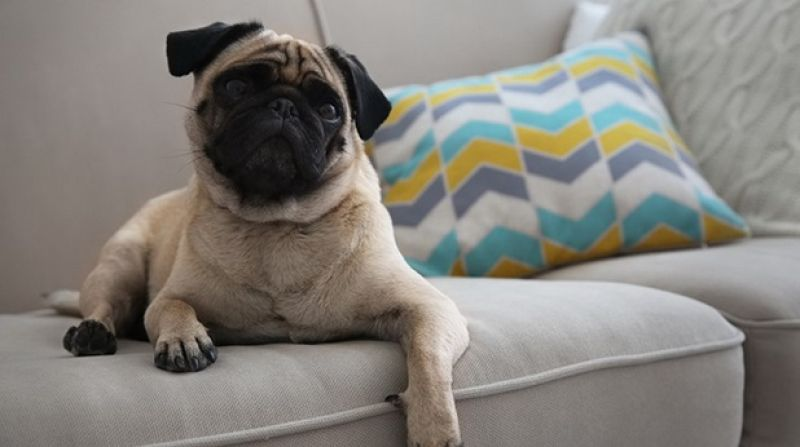 Sofas, rugs, bed linens are all prone to being stained by your pets.