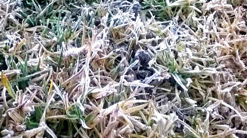Frosting in the lawns in Kulicholai area in Ooty on Wednesday morning. (Photo: DC)