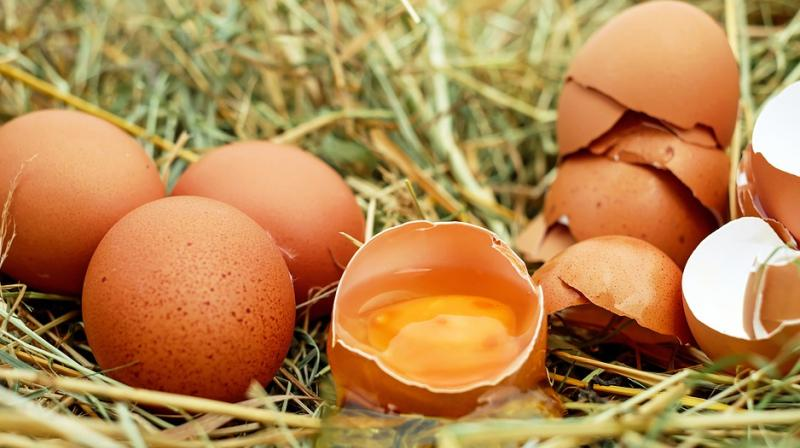 Despite Conflicting Advice, Eating Eggs Found Not Linked with Cardiovascular Risk