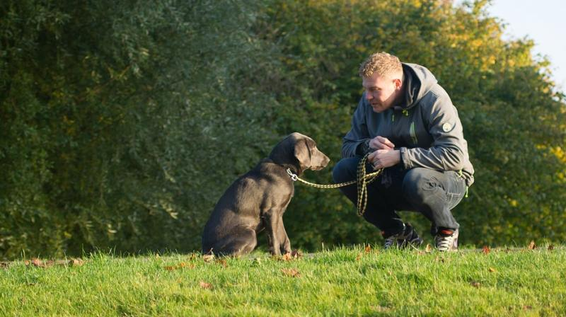 Police expert says 'awareness courses' should be mandatory for dog owners. (Photo: Pixabay)