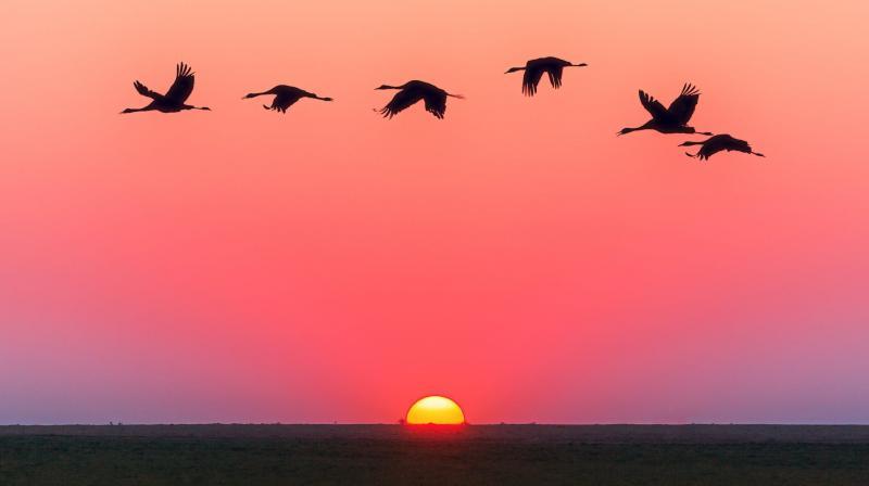 Migrating Birds Help Scientists Study How Influenza Evolves