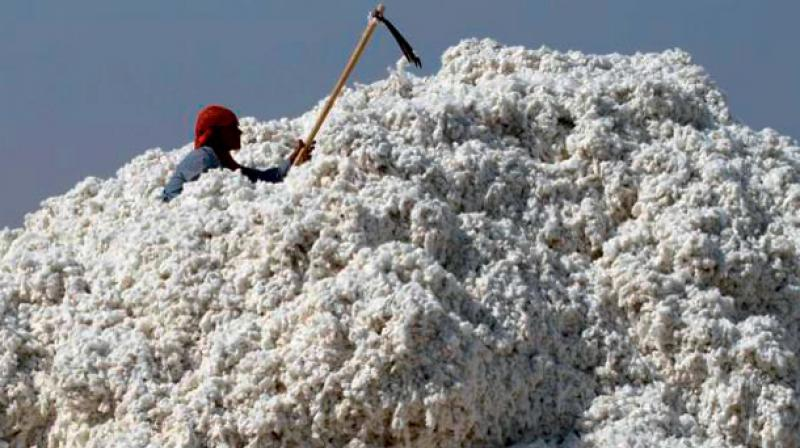 India has signed contracts to export 200,000 bales of cotton to China in the past one week.