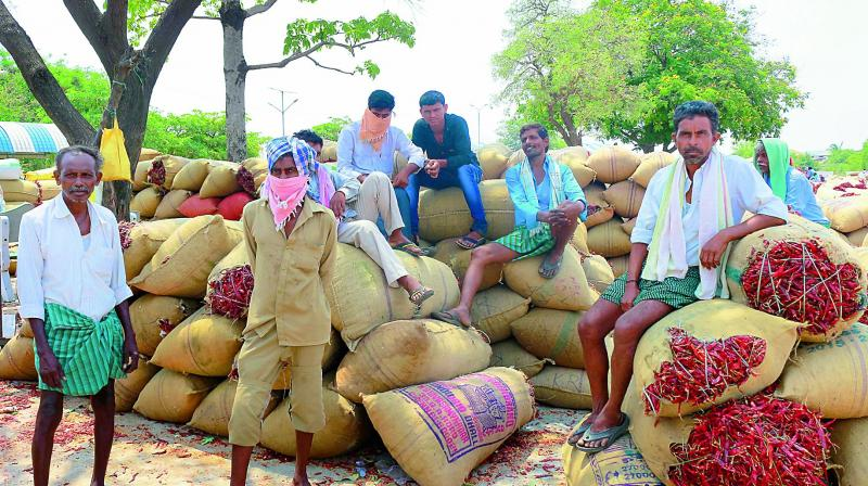 Farmers wait for buyers for their chilli produce at the Enumamula agricultural market yard in Warangal. (Photo: DC/Representational Image)