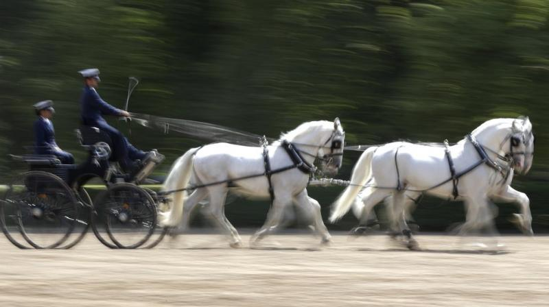 """UNESCO describes it as """"one of Europe's leading horse-breeding institutions, developed at a time when horses played vital roles in transport, agriculture, military support and aristocratic representation. (Photo: AP)"""