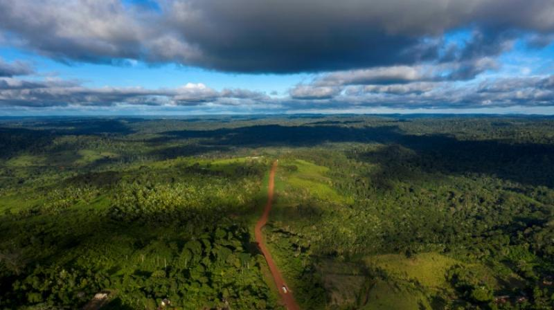 The landscapes of lions, giraffes and vast herds of wildebeest cover more than 20 percent of Earth's land surface and can be as rich in biodiversity as tropical forests. (Photo: AFP)