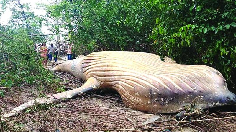 Whale carcass found in Amazon