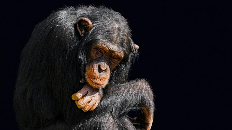 The researchers found that the animals eat the brains of infants, adolescents and juveniles first.