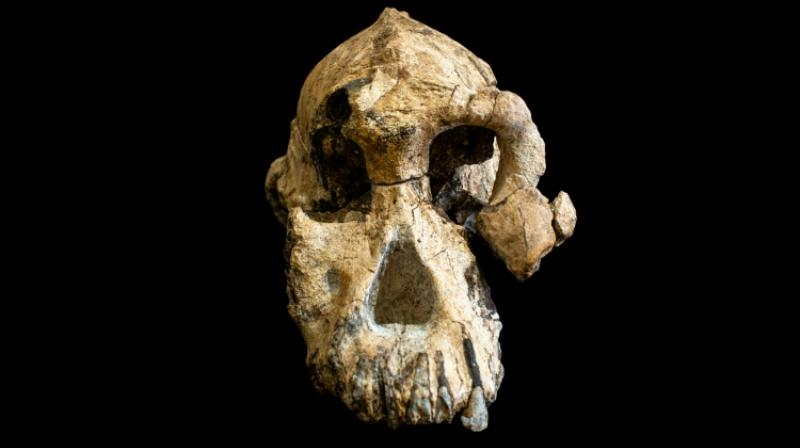 This is a game changer in our understanding of human evolution during the Pliocene. (Photo: AFP)