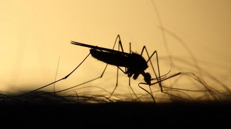 The parasite responsible for malaria is transmitted to people through mosquito bites. (Photo: ANI)
