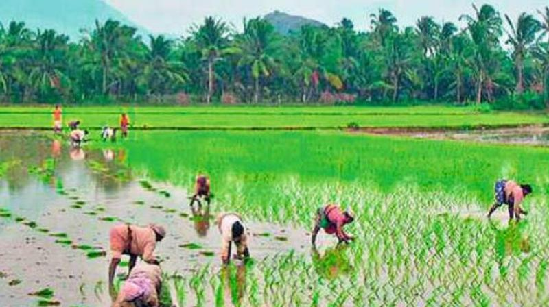 Some turmeric farmers from Erode in Tamil Nadu  will also join them in Varanasi, the farmers said.