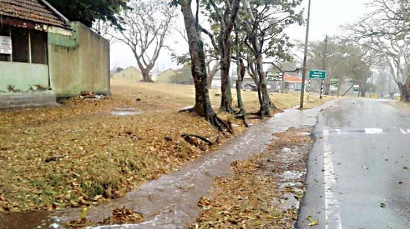 Bandipur National Park experienced its first shower of the season —DC