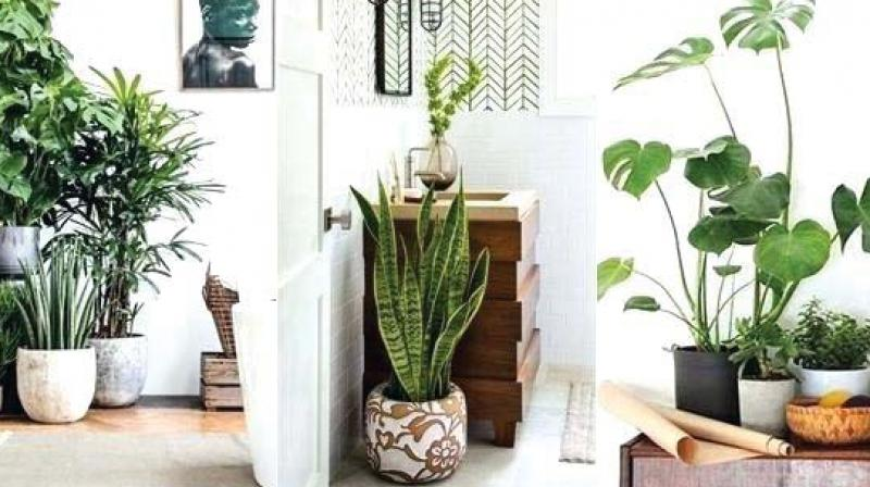 Faux plants and flowers are trending a lot these days, and there are numerous advantages of these artificial blooms.