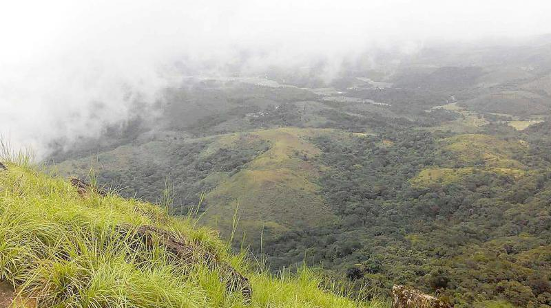The proposed Shishila-Byrapura road passes through this fragile forests of the Western Ghats. (Photo: DC)