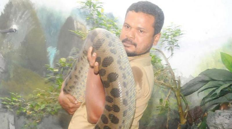 A. S. Harshad with Angela, one of the Anacondas. (File pic)