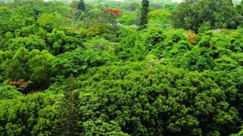 It selected 45 cities from across the world for the project which aims at incorporating forests into the urban strategy to address climate change issues. Kochi is the only city selected from India on the list. (Representional Image)