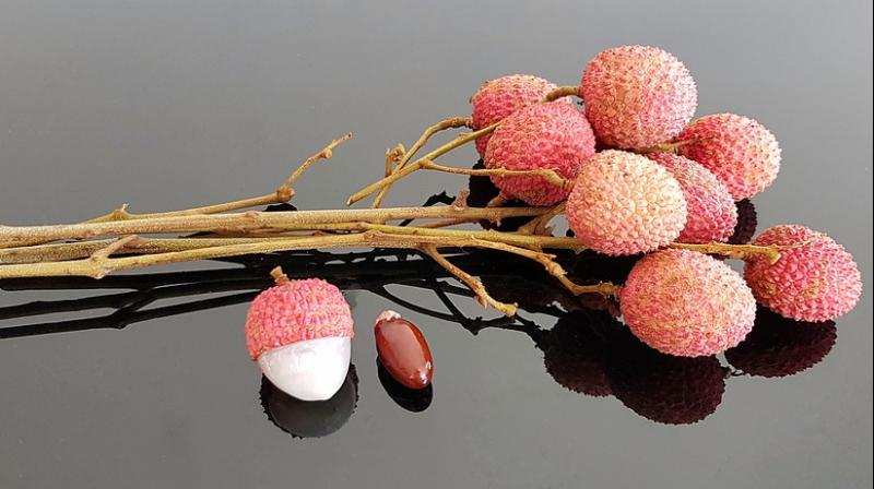 Brain disease linked to lychee toxins kills 47 children