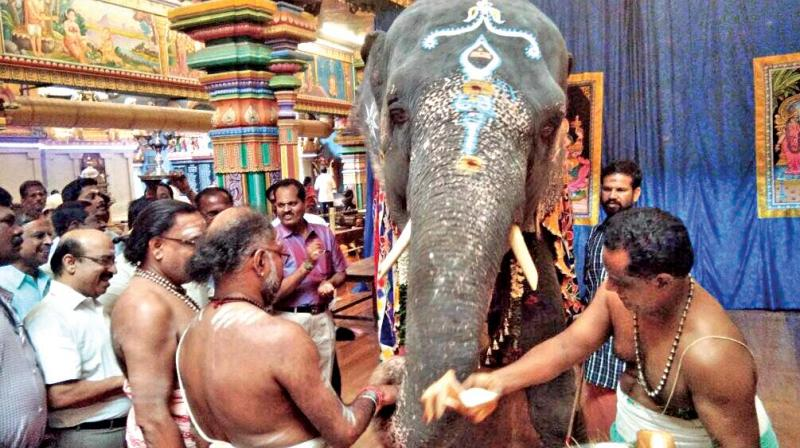 Special pooja done in the  temple before  elephant leaves for camp. (Photo: DC)