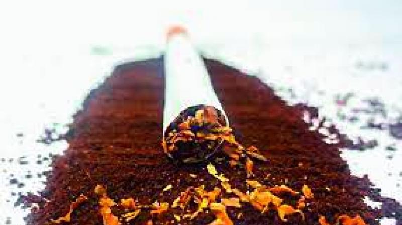 Filtered cigarettes and light sticks are some forms of tobacco which are now being showcased as alternatives to regular cigarettes.