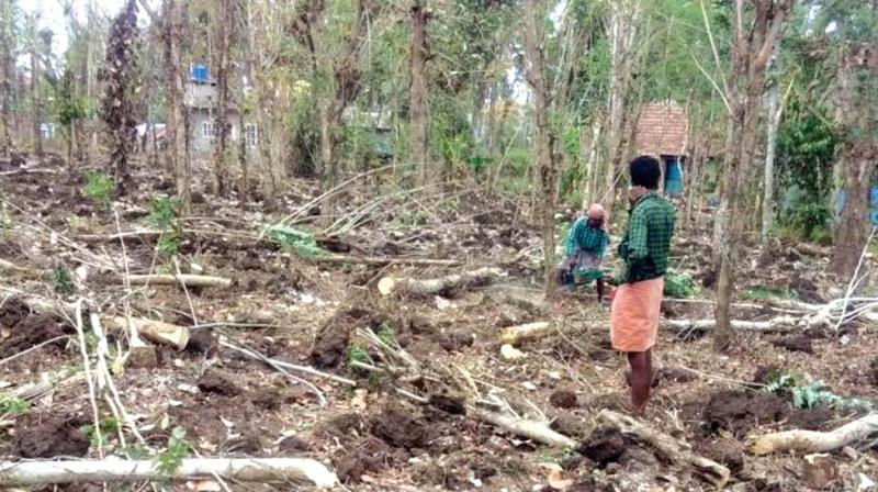 The most affected districts are  Palakkad  and Wayanad. Malappuram district's agriculture loss has been estimated at Rs 7, 405 lakh.