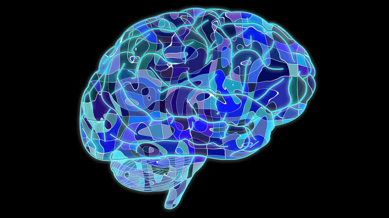 Bigger brains associated with increased risk of cancer. (Photo: Pixabay)