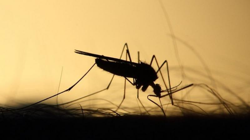 The outbreak of Japanese encephalitis coincides with the June-October monsoon season and the post-monsoon period when the density of mosquitoes increases. (Photo: Representational/Pixabay)