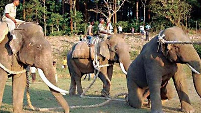Assuring that several measures had been taken to prevent frequent raiding of villages by elephants, he said they included improvised solar fences, construction of water tanks for wild animals, building of elephant-proof trenches and setting up of rapid response teams to chase straying elephants back into forests.