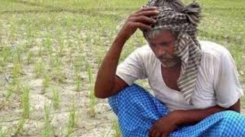 Agrarian distress has yet again reared its head, with another farmer of Ayakkaranpulam village near Vedaranyam in Nagapattinam district collapsing in his field in the wake of crop failure this year due to lack of adequate water in Cauvery for irrigation. (Representational image)