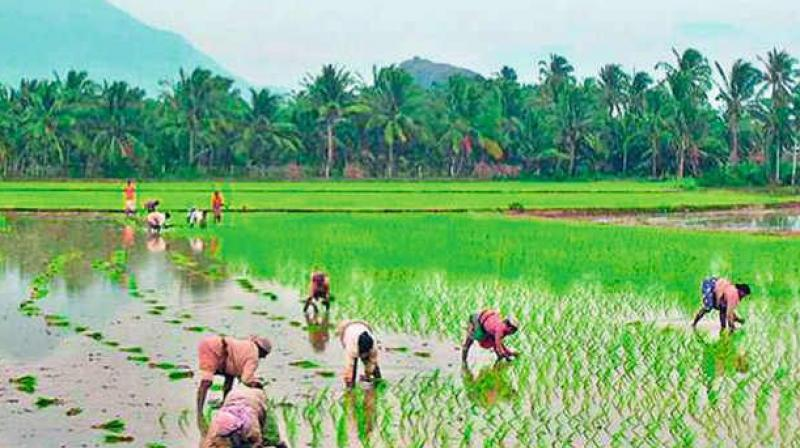 Budget allocation for the agriculture ministry has been increased by 13 per cent to Rs 58,080 crore for the 2018 -19 fiscal, from Rs 51,576 crore for this year.