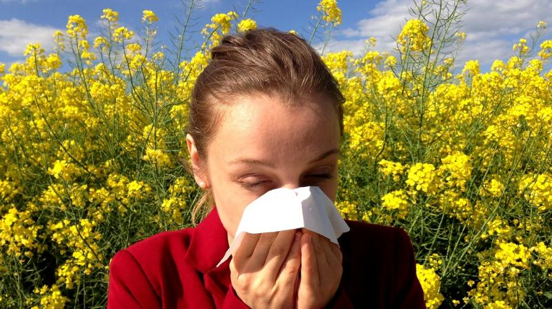 Taking a multifaceted approach can provide much needed relief from pollen allergies, which have plagued humankind throughout the millennia. (Photo: Representational/Pixabay)
