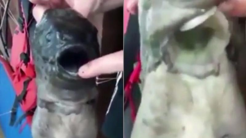 The fishermen in the clip seem to think of it as a monster (Photo: YouTube)