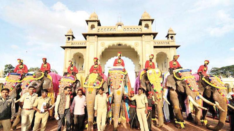 The first batch of six Dasara pachyderms, Arjuna, Abhimanyu, Dananjaya, Eeshwara, Vijaya and Varalakshmi who arrived in Mysuru on August 22.