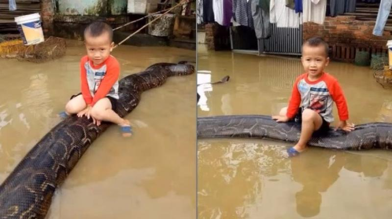 Video: Shocking footage of 3-year-old riding 20-feet-long python goes viral