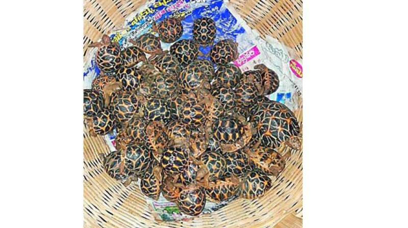 The demand for Indian star tortoises continued, as about 1,531 animals were seized before being exported from Vijayawada and Visakhapatnam railway stations to Bangladesh.
