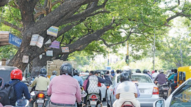 Advertisement boards nailed to trees on New Avadi Road in Chennai. (Photo: DC)