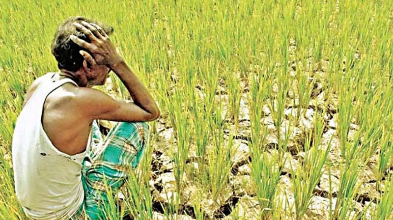 Many farmers had hoped that their crop loans from nationalised banks would be waived, but they are disappointed.