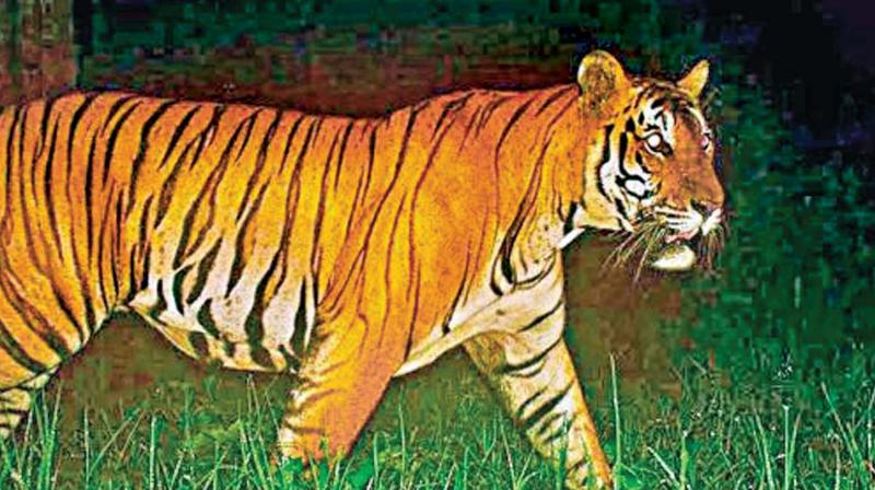 According to TN wildlife sources there were cases of NTCA pulling up the state authority for not utilizing funds given to the Kalakad Mundanthurai Tiger reserve.