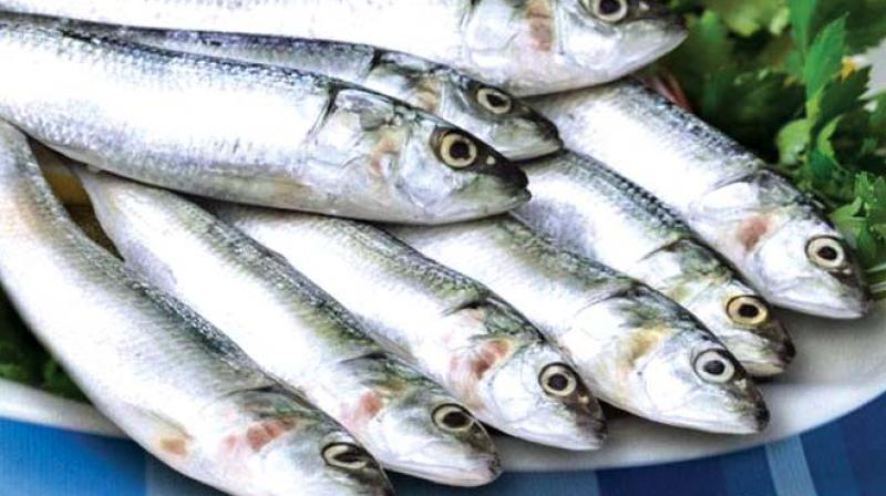 The online fish portals www.freshtohome.com came out with a unique offer on attaining one lakh customers.