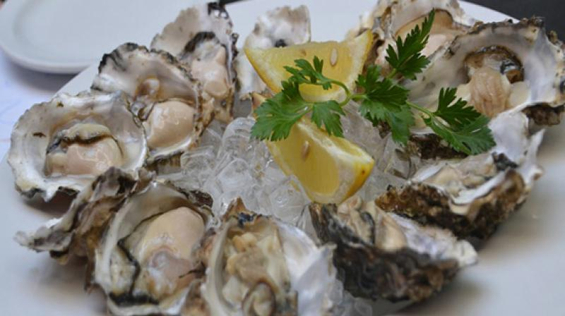 Researchers studied three groups of Olympia oysters from different areas of the California coast where the influence of rainfall on seawater salinity varies. (Photo: ANI)