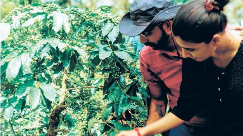 Vishal and Aditi Mehta foster wildlife on their organic coffee plantation while making sure the brew you have in the morning is of high quality.