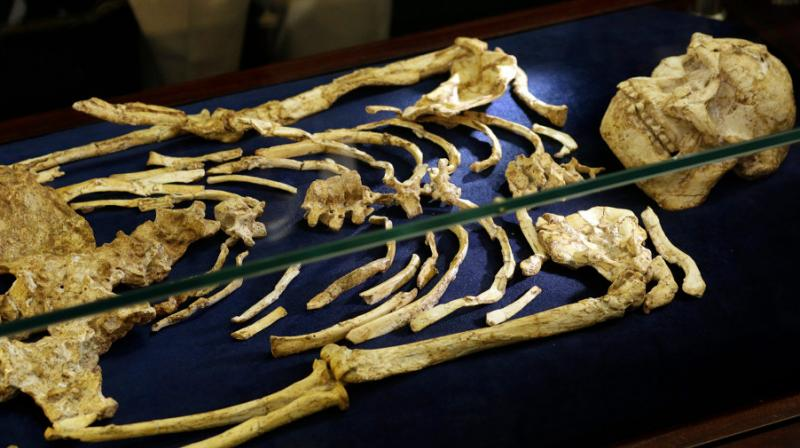 The skeleton, dubbed Little Foot, was discovered in the Sterkfontein caves, about 40 kilometers northwest of Johannesburg when small foot bones were found in rock blasted by miners. Photo:AP