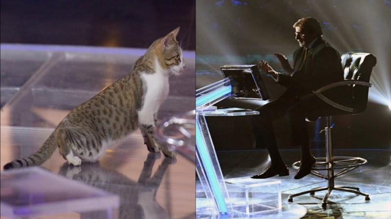 Amitabh Bachchan and a cat. (Photo: Twitter)