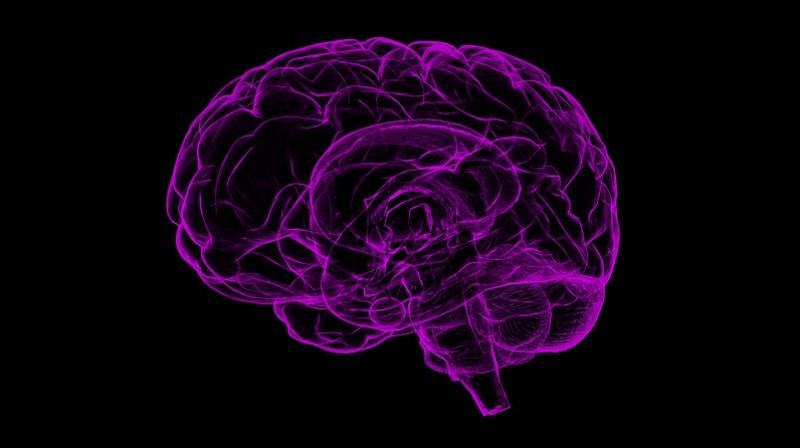 Semaphorins play an important role in the formation of neural connections in the hypothalamus. (Photo: Pixabay)