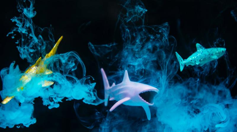 Untouched marine habitats could vanish within half a century. (Photo: Pixabay)