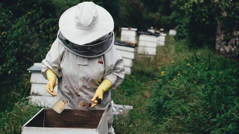 Her small honey-making business provides not only an income, but a sense of pride. (Photo: Pixabay)