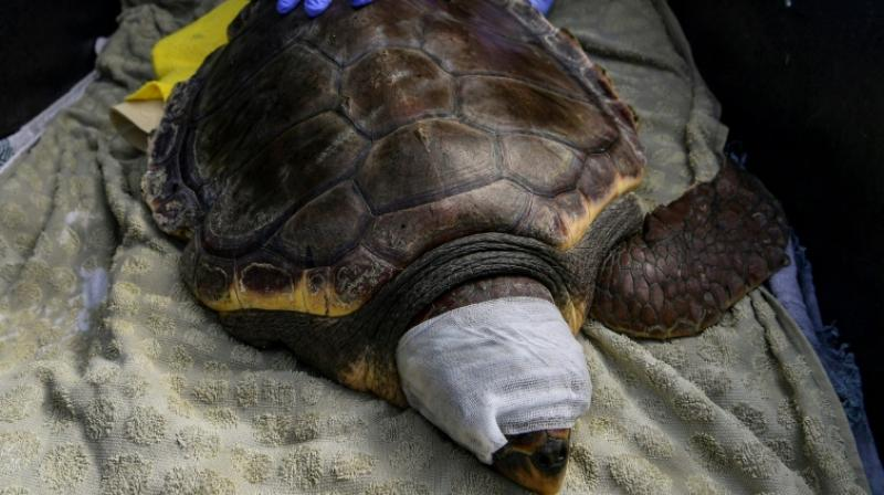 Fishermen are often blamed as repairing fishing nets damaged by turtles can be costly. (Photo: AFP)
