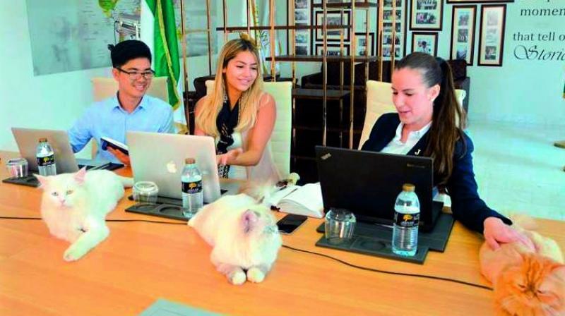 Jannah Hotels and Resorts said that so far, the cats have been employed at the hotel's head office located in Abu Dhabi.