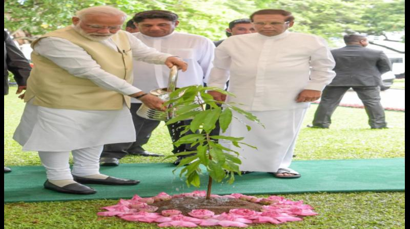 A plaque put next to the sapling read 'Asoka Saraca asoca, planted by Prime Minister Modi in Colombo on June 9, 2019.' (Photo: Twitter)