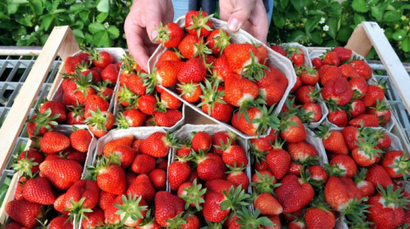 Strawberries remained at the top of the list with at least 20 pesticides (Photo: AFP)