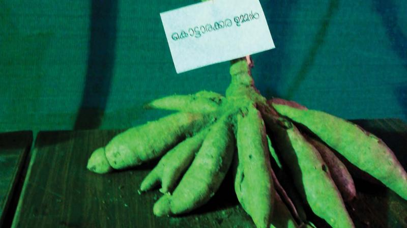 Organic kappa can also be bought at a stall.